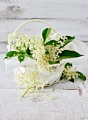 Elderflower blossoms in a white basket