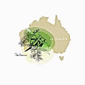 Arzneimittel-Kräuter aus Australien