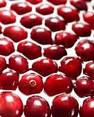 Viele Cranberries im Wasser