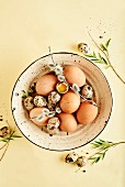 Still life of fresh spring eggs in a bowl