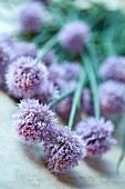Chive flowers (close-up)