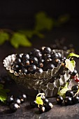 Freshly harvested black currants in pie dishes