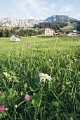 The alpine meadow in front of the 'Mattlihüs' hotel in Oberjoch in the Allgäu region of Germany