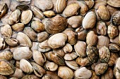 Raw fresh clams vongole seashells background