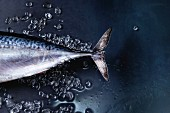 Raw fresh whole tuna fish on crushed ice over dark wet metal background