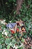 Fresh stone fruits in wooden boxes on an ivy covered garden floor