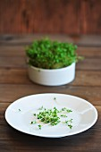 Freshly chopped cress on a plate in front of a pot of cress