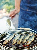 Sardines on a barbecue
