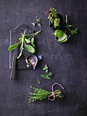Various herbs on a dark background