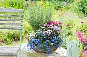 Korb auf Gartenmauer bepflanzt mit Lobelia (Männertreu), Dianthus 'Pink Kisses' (Nelken) und Rosmarinus (Rosmarin)