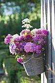 Strauß aus Dianthus barbatus (Bartnelken) in Becher an Zaun gehängt