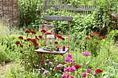 Stuhl im Beet zwischen Dianthus barbatus (Bartnelken) im Bauerngarten