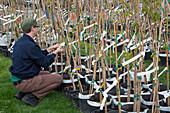 Free tree replacement program, Detroit, USA