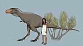 Albertosaurus dinosaur, illustration