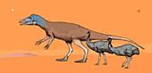 Australovenator dinosaur, illustration