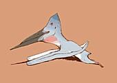 Pterosaur flying reptile skimming, illustration