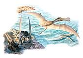 Ornithocheirus pterosaur, illustration