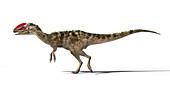 Guanlong dinosaur, illustration