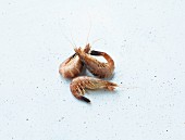 Three North Sea shrimps on a white background