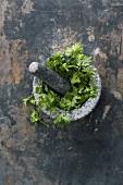 Fresh parsley in mortar