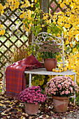 Chrysanthemum indicum ( Herbstchrysanthemen ) und Sedum telephium