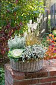 Runder Korb herbstlich bepflanzt auf Gartenmauer : Brassica ( Zierkohl