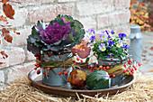 Brassica oleracea 'Pigeon Purple' ( Zierkohl ) und Viola cornuta