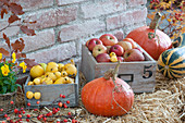 Frisch geerntete Malus ( Äpfel ), Chaenomeles ( Zierquitten )