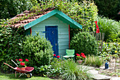 Kleines Gartenhaus in tuerkis mit blauer Tuere, Buxus ( Buchs ),