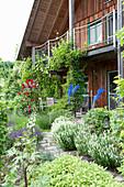 Weg zur ueberdachten Terrasse zwischen Salvia nemorosa 'Schneehuegel'