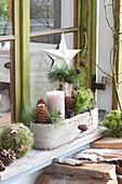 Natuerliche Adventsdeko vorm Fenster mit Zweigen von Pinus