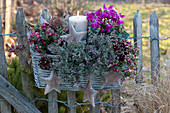 Weihnachtlicher Korbkasten an Zaun gehaengt : Pernettya mucronata