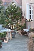 Weihnachtliche Terrasse mit Pinus nigra ( Schwarzkiefer )