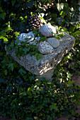 Kleine Dekoration im Schattenbeet : Granitsaeule zwischen Hedera