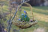 Hängendes Korb-Nest aus aus Zweigen von Cornus stolonifera 'Flaviramea'