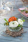 Glasschale mit Blüten von Ranunculus ( Ranunkeln ) in Kranz aus Gras