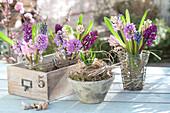 Sträuße aus Hyacinthus ( Hyazinthen ) mit Gläsern in Drahtkörbe