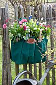 Gärtnertasche zweckentfremdet und bepflanzt an Zaun gehängt :