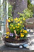 Narcissus 'Tete a Tete' ( Narzissen ), Tulipa 'Calimero' ( Tulpen ), Viola