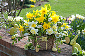Gelb-weißer Osterstrauß im Korb : Narcissus ( Narzissen ), Helleborus