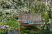 Holzbank vor Malus ( Zierapfel ), Korb bepflanzt mit Tulipa ( Tulpen ) Narcissus
