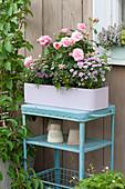 Pastell-lila Kasten mit Rosa ( Rose ), Dianthus 'Pink Kisses' ( Nelken )