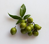 A cluster of Quenepas (also known as Spanish Limes, genip or Kenips) on a white surface