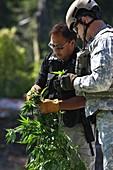 Marijuana farm raid