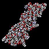 Programmed death-ligand 1 molecule, illustration