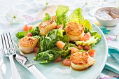 Scallops with salad