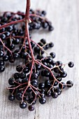 Elderberries on the stem