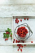 Freshly picked Cornelian cherries in a wire basket and scattered on a wooden table