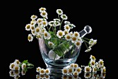 Fresh chamomile blossoms in a glass mortar