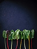 A row of swiss chard leaves with different coloured stems